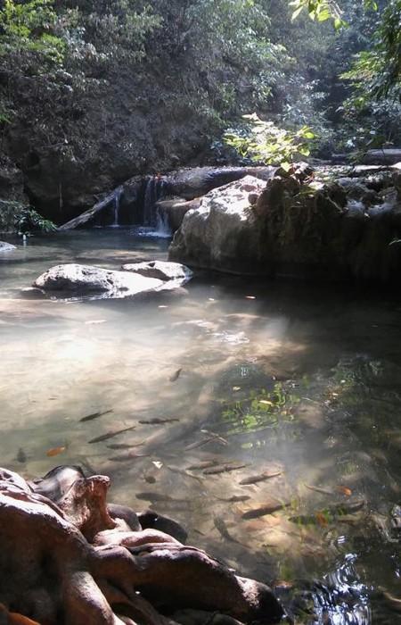 Kalajengi Kanchanaburissa (kuva: Hanna)